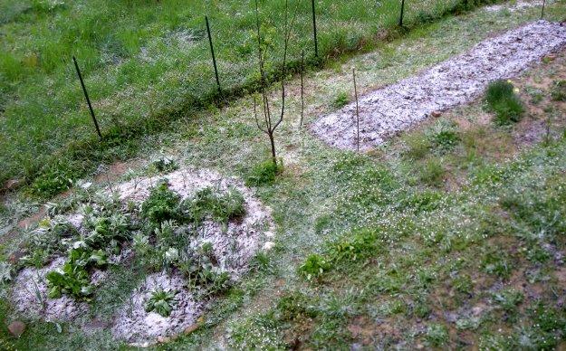 Ultima neve