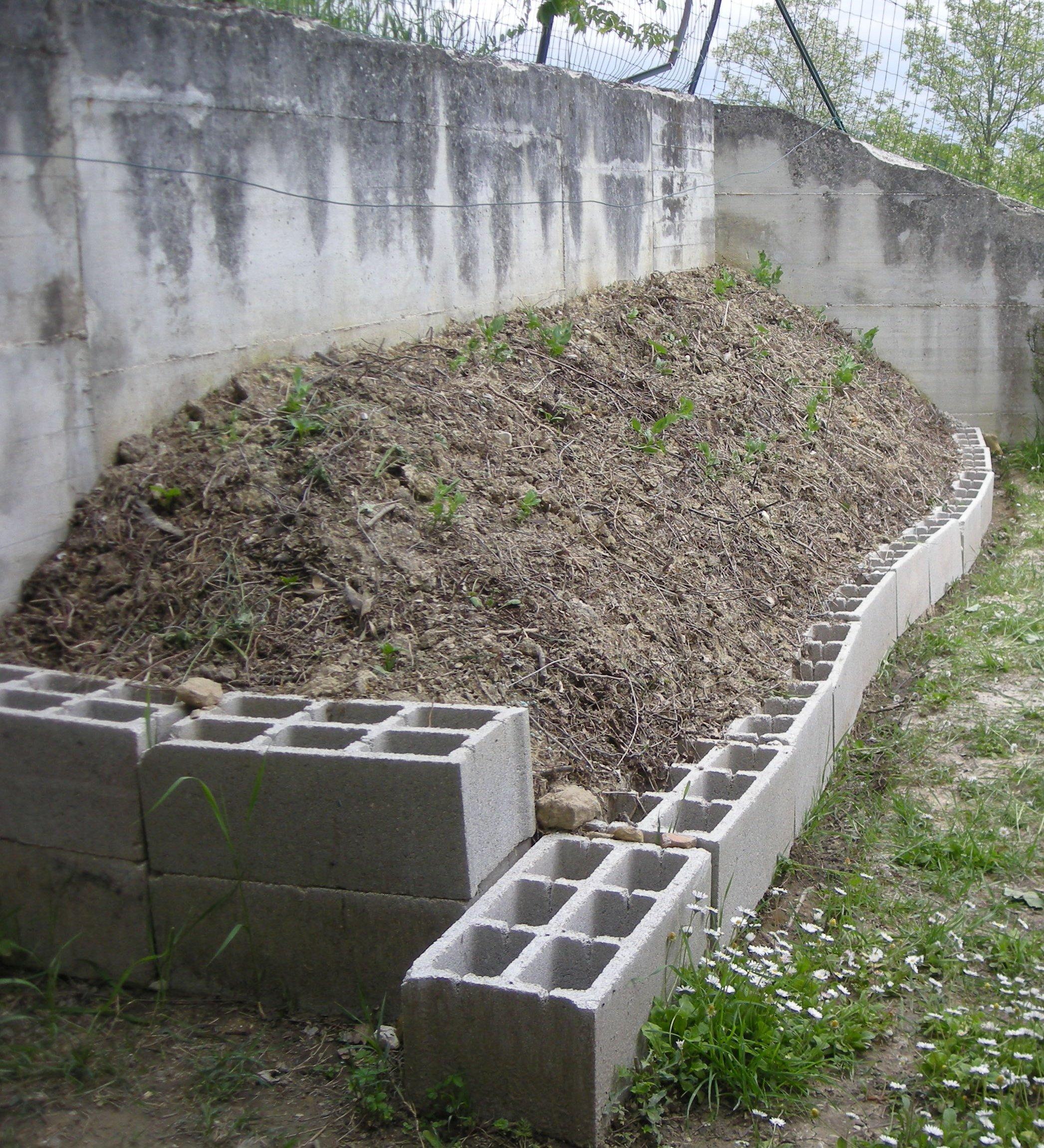 Orto verticale: semine e trapianti