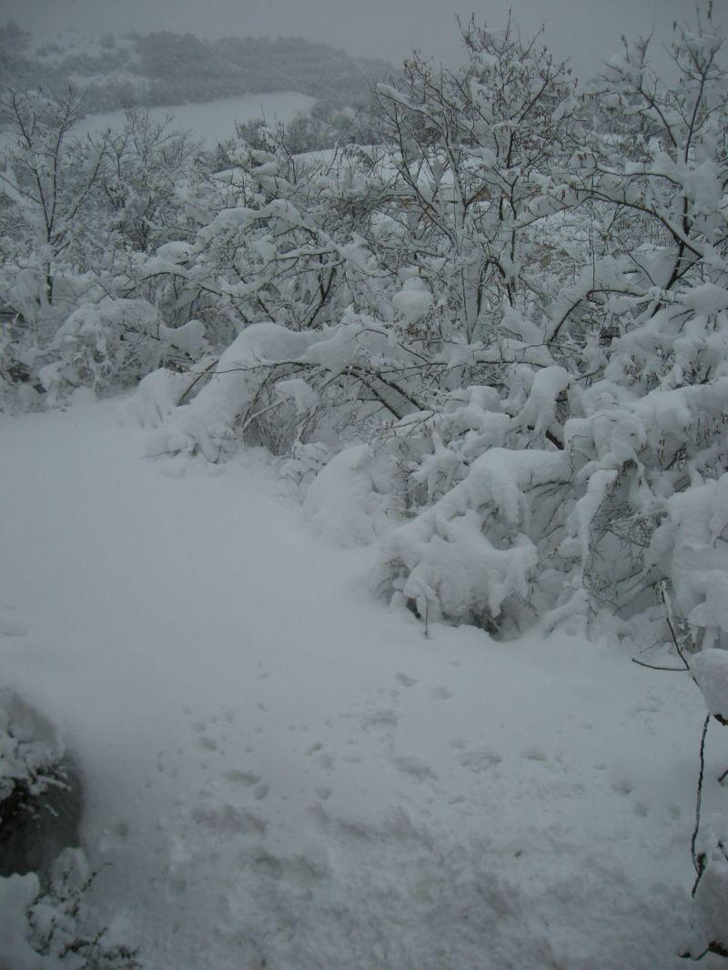 noccioleto-neve-2017